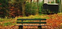 Herbstwald by Gertrud  Aulbach