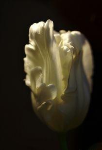 Lichtspiel von Gertrud  Aulbach