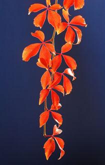 Herbstzeit by Thomas Jäger