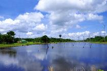 Amazonas Fluss von Corinna Bell