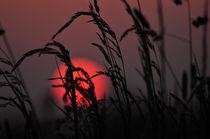Die Sonne geht schlafen von Marianne Drews