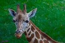 Giraffe von Carlos Segui