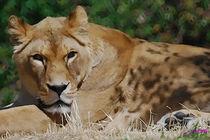 Lion von Carlos Segui