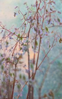ZART von © Ivonne Wentzler