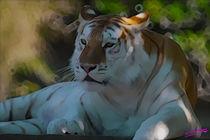 Tiger von Carlos Segui