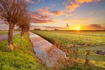 Meadowland at sunrise von Sara Winter
