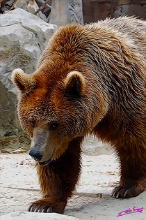 Bear von Carlos Segui