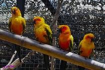 Birds von Carlos Segui