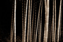MAGICAL NATURE - WONDERFUL BAMBOO VI von Thomas Kretzschmar