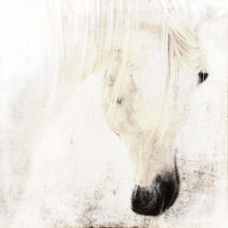 innocenza von artfulhorses-sabinepeters