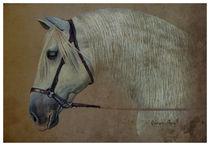spanish horse by Carlos Cárcamo Luna