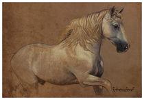 white horse by Carlos Cárcamo Luna