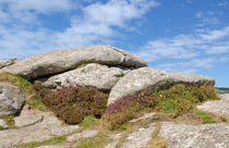 Heather growing in the shelter of a Cornish Granite Tor  by Paul Martin
