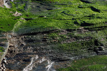 Green seaweed on rocks by Paul Martin