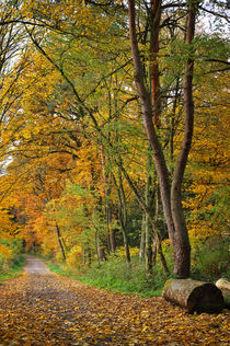 Waldweg von AD DESIGN Photo + PhotoArt