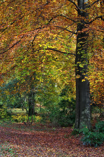 Herbstbäume by AD DESIGN Photo + PhotoArt