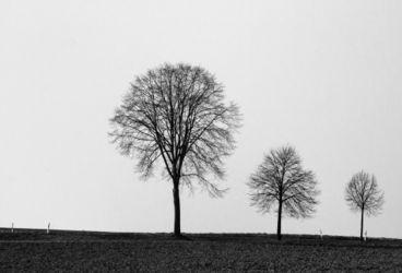 Baum-trio