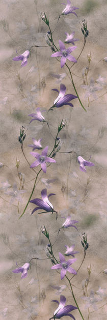 'Campanula - Panorama' by Chris Berger