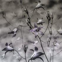 'Vor dem Sturm' von Chris Berger