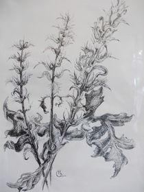 Amarant by Dorothy Maurus