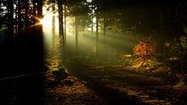 Waldeslicht von k1ngp1n