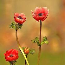 Frühlingsboten.... von Gertrud  Aulbach