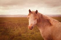 Wild horse von Steve Ball