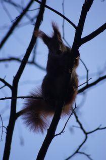 Abhängen in Blau / Eichhörnchen II - Hanging around in  blue / squirrel II von mateart