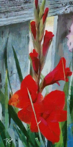 Gladiolus-557397-dap-gruppe4