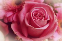 Rose in pink von leddermann