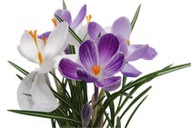 orchids von Analida  Guzman