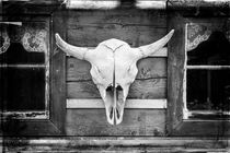 Buffalo Skull by David Hare