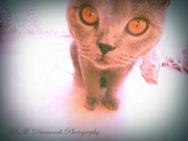 Big Cat Eyes von S.M. Diamonds Photography