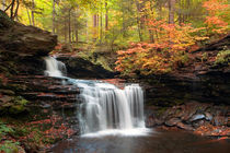 R-b-ricketts-in-the-changing-forest-c-img-9225