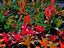 potted plants von Howard Lee