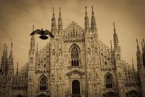 Pigeon Over Duomo von Adrianne Bottrell