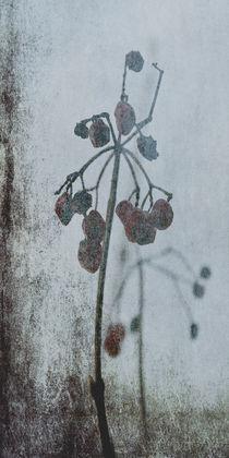'Raureif -  Rime' von Chris Berger