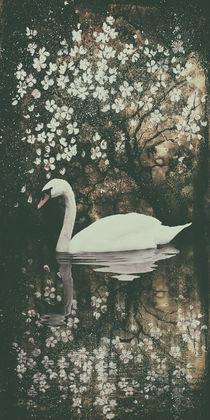 Schwanensee  - Swan lake III von Chris Berger