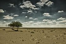THE GREAT WIDE OPEN - GOLDEN GOBI XXXI von Thomas Kretzschmar