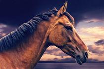 Pferd am Meer by AD DESIGN Photo + PhotoArt
