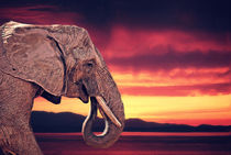 Elefant am Abend von AD DESIGN Photo + PhotoArt