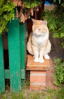 stray waif red cat sitting by Arletta Cwalina