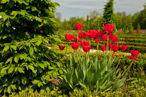 elm and red tulips arranged by Arletta Cwalina