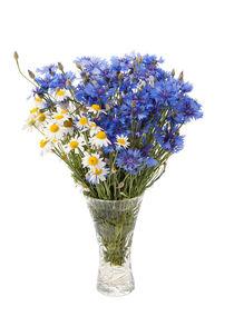 White camomile and blue cornflower von Arletta Cwalina