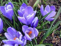 Frühlingsgruss by rosenlady