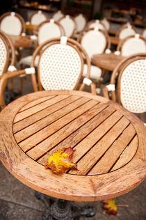 Yellow old autumn leaf fallen by Arletta Cwalina