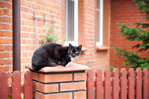 lonely stray black cat sitting von Arletta Cwalina