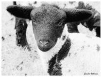Süßes Lamm Zauberhaft  by Sandra  Vollmann