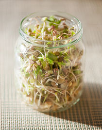 Many cereal sprouts growing by Arletta Cwalina