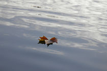 Herbstwasser 1
